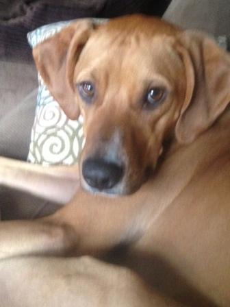 Dog Walker Morris County - Tyson