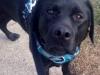 Pet Sitter Morris County - Max