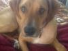 Morris County Pet Sitter - Tyson