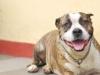 Dog Walker Boonton - Butch