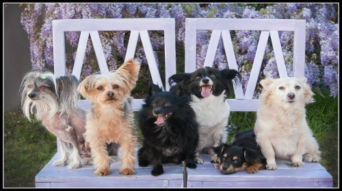 WOOF9 Pet Sitting & Dog Walking Lincoln Park, NJ